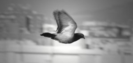 937429_bird_flying